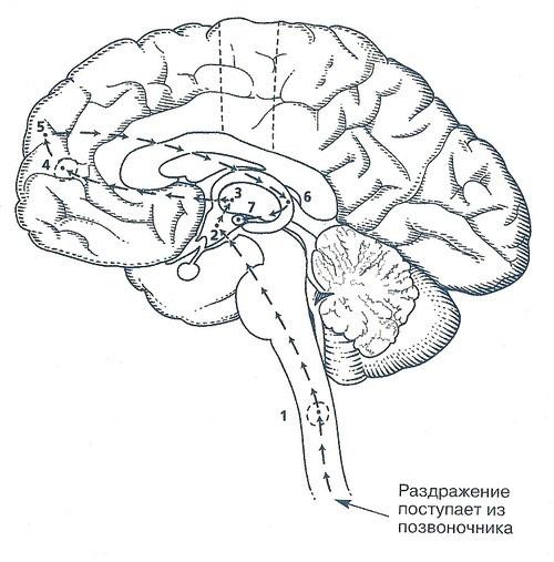 http://www.e-reading.pw/illustrations/1015/1015053-i_001.jpg